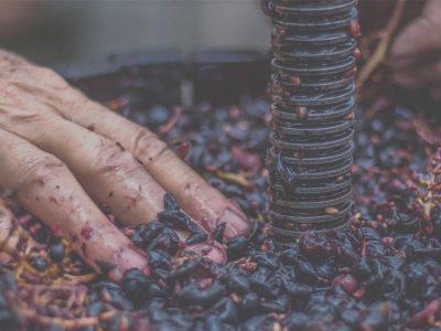 la corsa wine